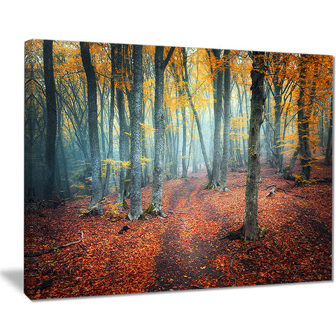 red and yellow autumn forest landscape photo canvas print PT8619