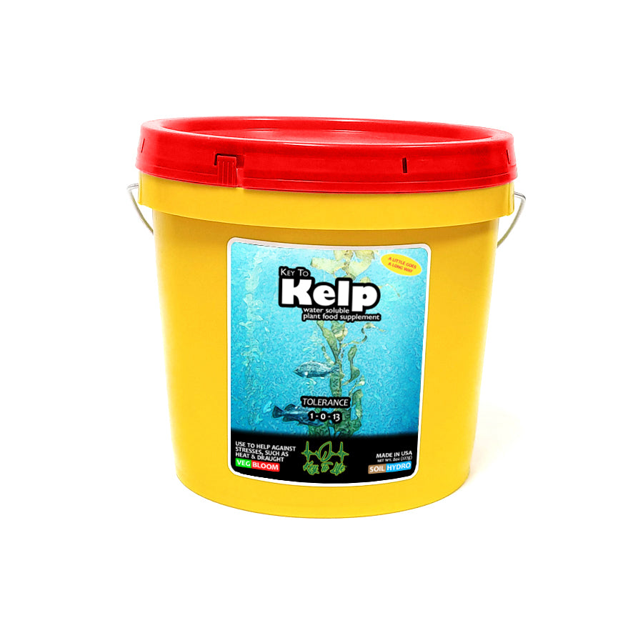 Key to Kelp