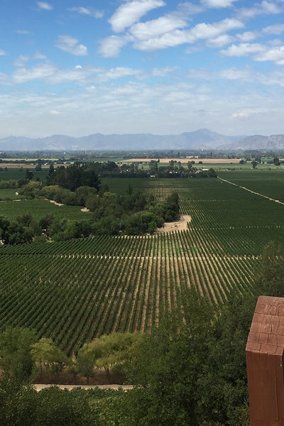 ADVENTURES IN CHILE | THE WINE COUNTRY