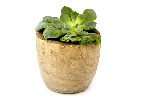 Small Paulownia Wood Planter