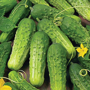 Case of Pickling Cucumbers