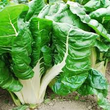Swiss Chard: Regular