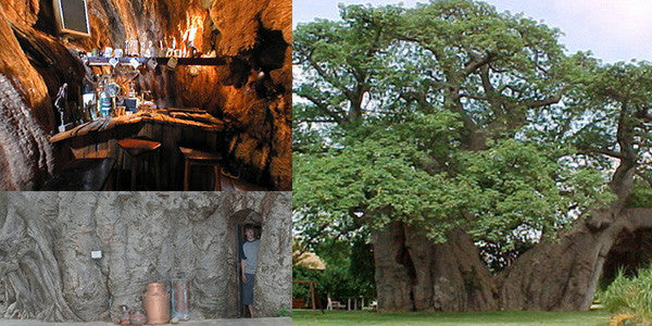 Amazing Facts About Limpopo's Sunland Baobab Bar