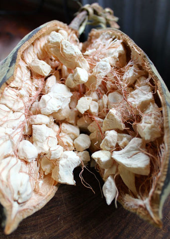 baobab fruit cracked open