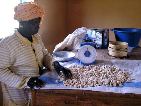 female processing baobab fruit pulp