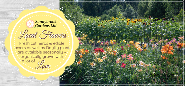 Fresh cut flowers, herbs and daylily plants are available seasonally for local pickup at Sunnybrook Gardens Ltd!