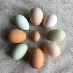 Fresh eggs from our pet chickens and an unusually tiny one too!
