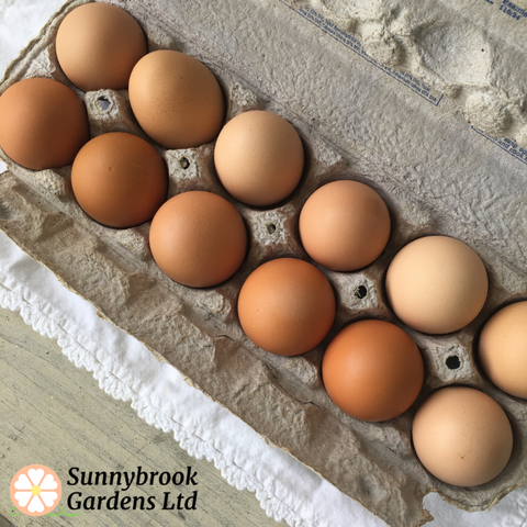 Enjoy Fresh Eggs from our chickens to your table!  Local pickup only in Brimfield, Ohio 44240