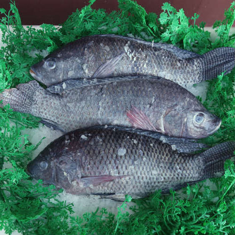 Tilapia - Whole Fish