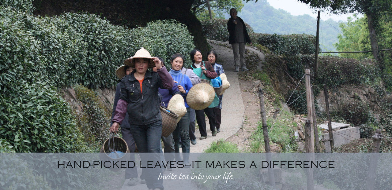 hand-picked teas–it makes a difference