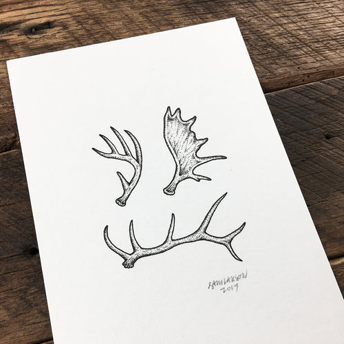 Antlers - Signed Print #42