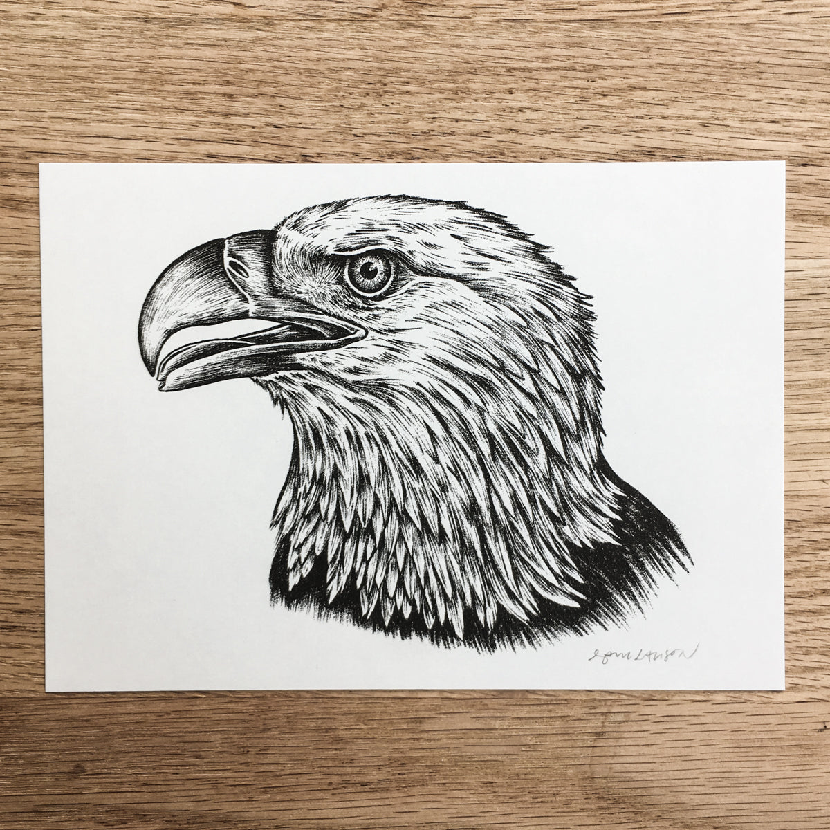 Bald Eagle - Signed Print #101