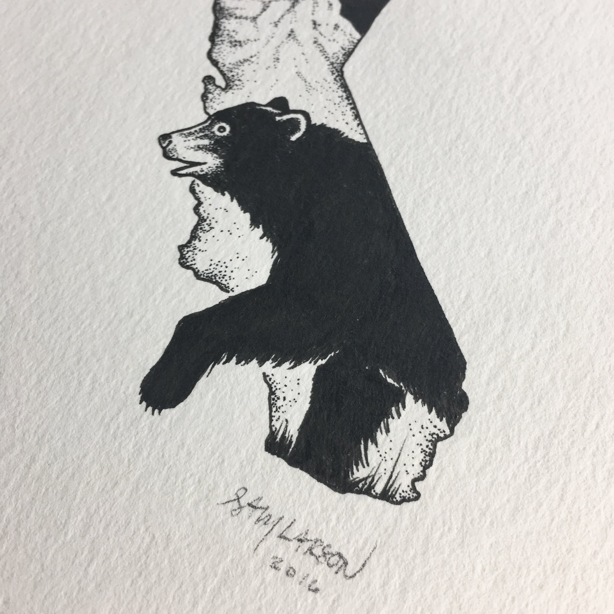 California Black Bear - Original Illustration 5x7in
