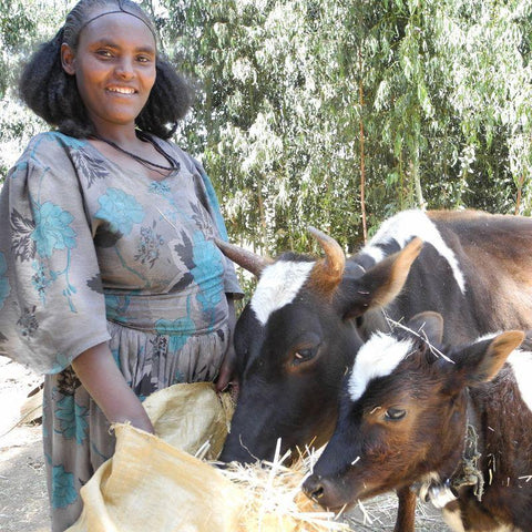 Afera was given a Cow by CAFOD which gave birth to calves a few months later.