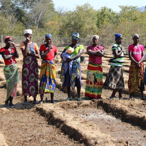 Some farmers who are growing drought resistant crops