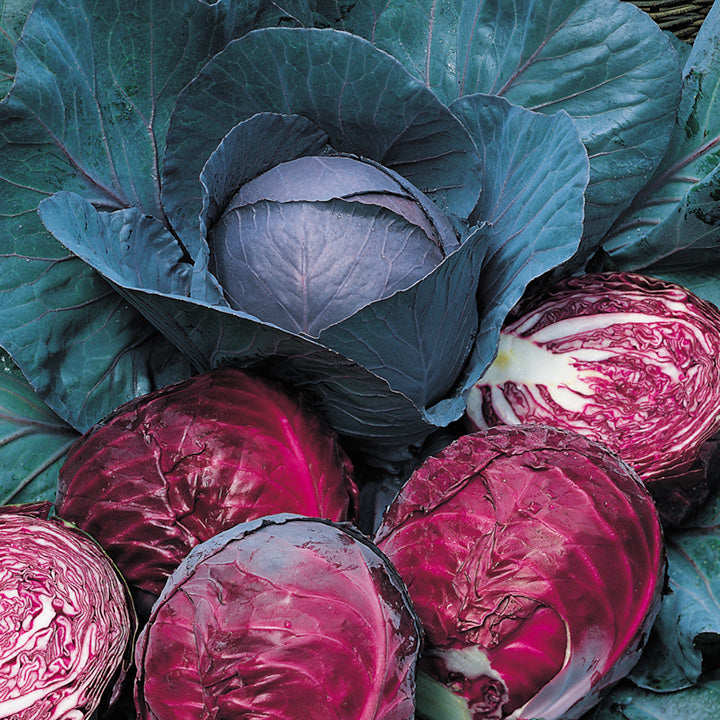 Cabbage 'Red Drumhead'