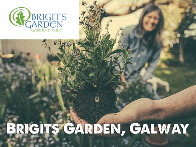 Introduction to Social & Therapeutic Horticulture Practice, Brigit's Garden Galway, May 11th