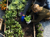 Introduction to Social & Therapeutic Horticulture Practice, March 23rd (GROW HQ Waterford)
