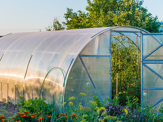 Polytunnel & Glasshouse with Richard Mee (March)