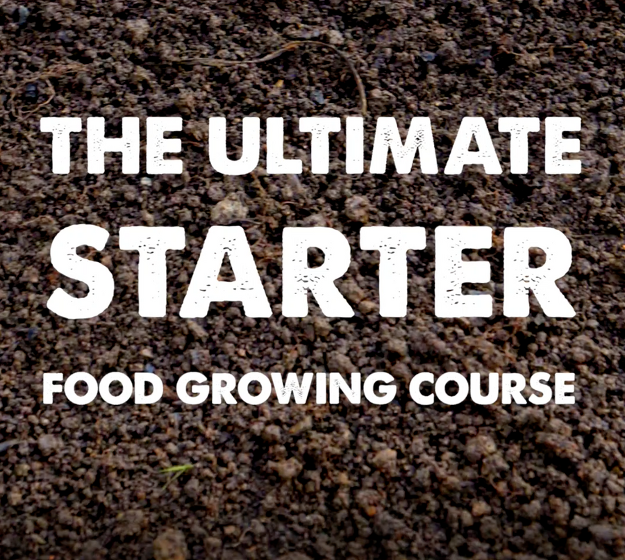 Ultimate Starter Course