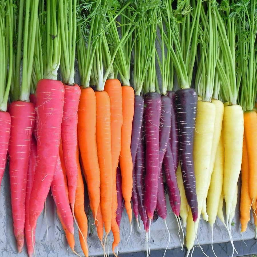 Carrot, Colour Mix