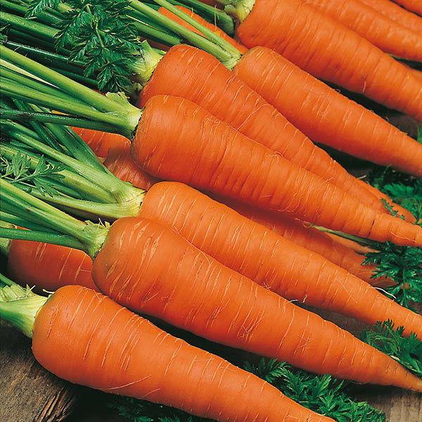 Carrot 'Autumn King'