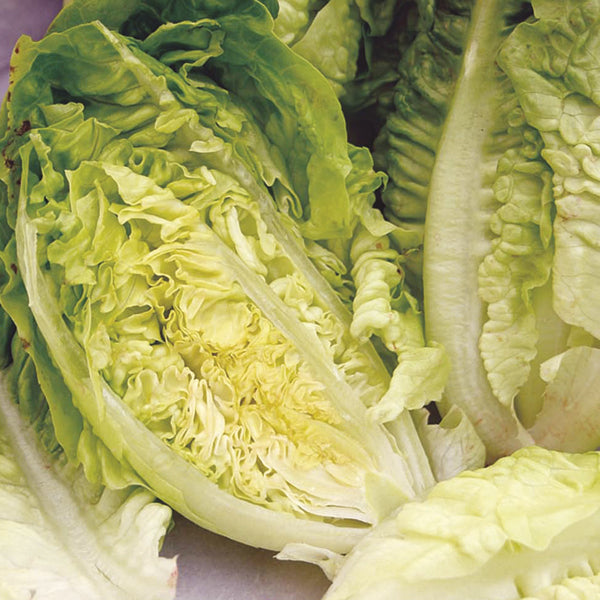 Lettuce, Cos 'Little Gem'