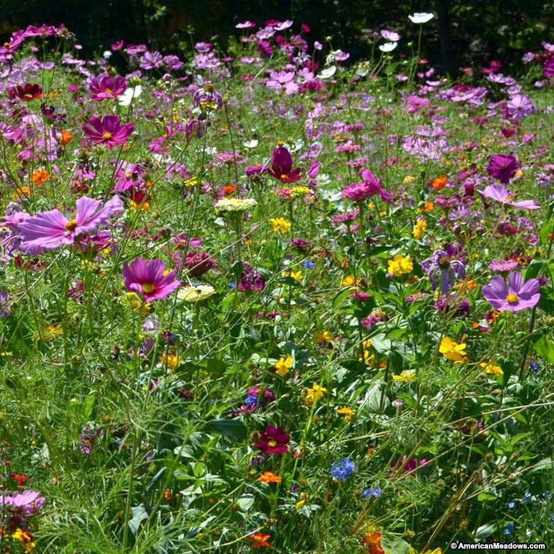 Wild Flower Mix - Butterfly & Bee Mix