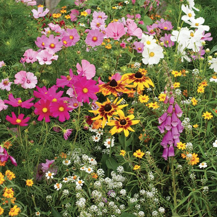 Wild Flower Mix - Cottage Garden Mix