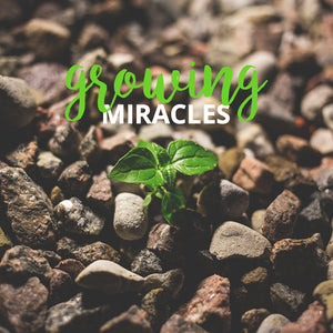 Growing Miracles [CD]