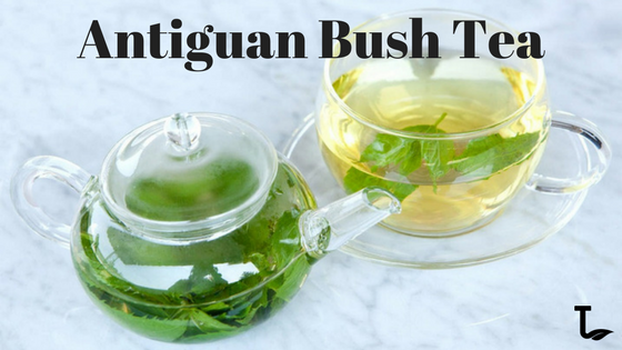 Antiguan Bush Tea