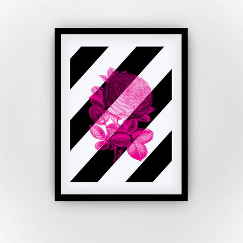 Fine Art Bureau - Pinq! - Graphic pink rose flower with large black and white diagonal stripes in the background - Quality fine art pigment print with black frame