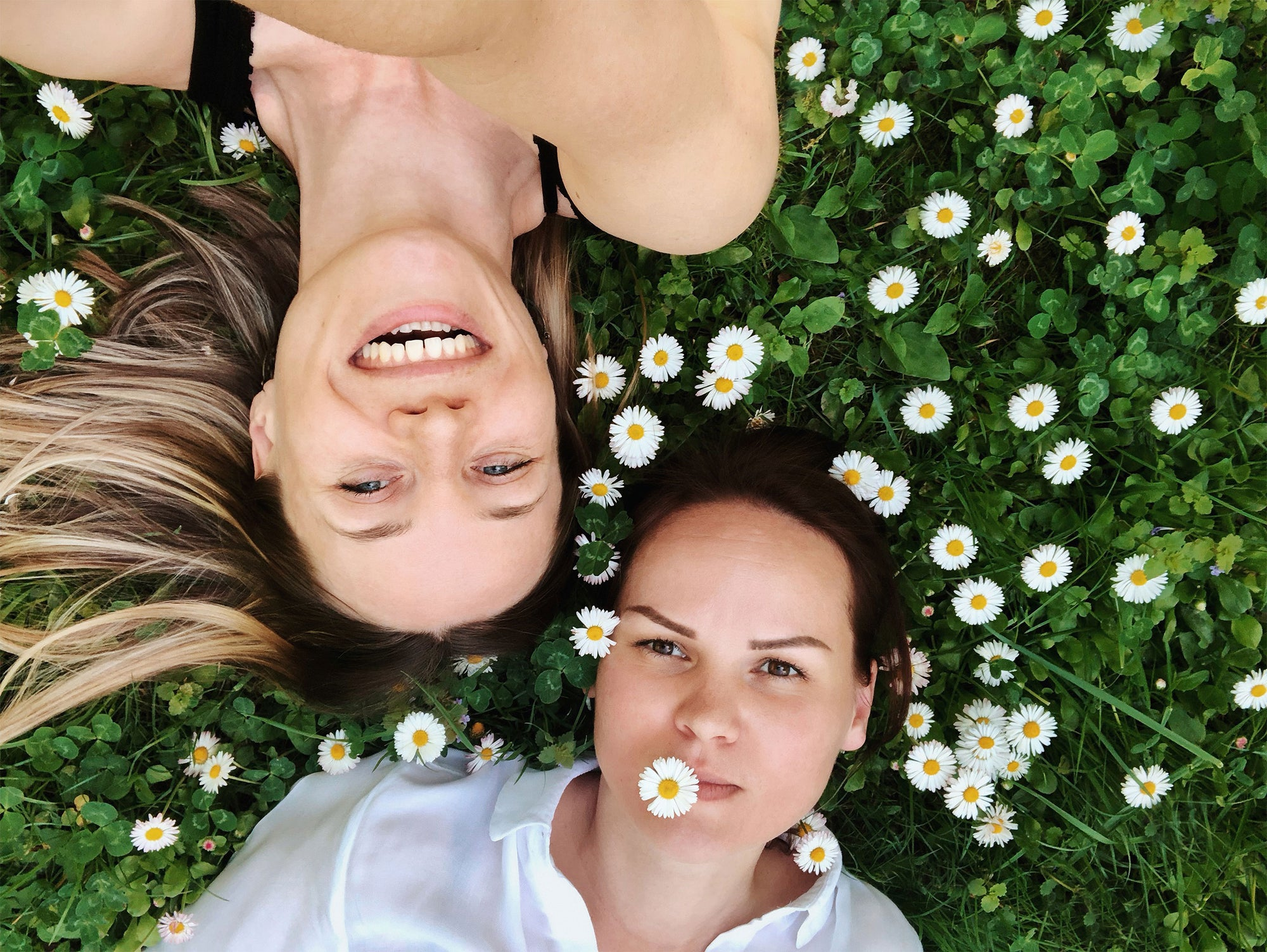 Chamomile and Why It's Good For the Skin