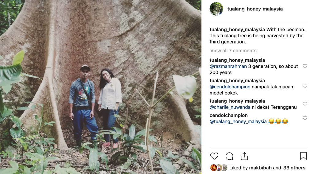 Gigantic Tualang tree