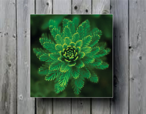 Plant Close Up Art Abstract Photo Panel - Durable Finish - High Definition - High Gloss