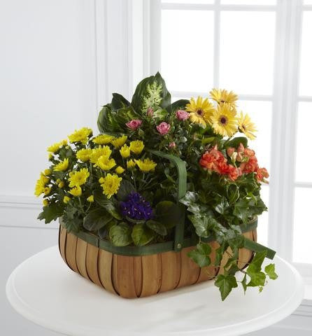 The FTD Gentle Blossoms Basket (S36-4524)