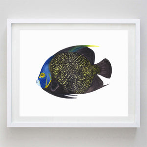 Tropical Fish 3 (Parrot Fish) Watercolor Print