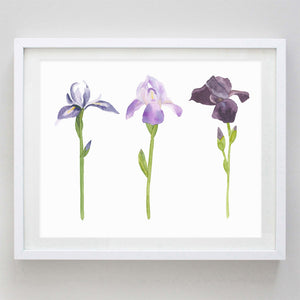 Iris Watercolor Print