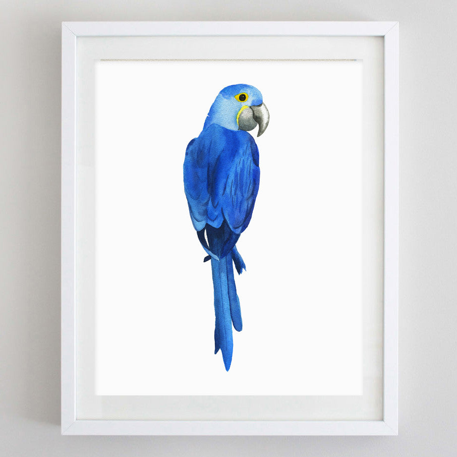 art print - hyacinth macaw watercolor print - carly rae studio