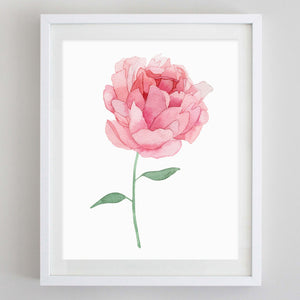 Pink Peony Watercolor Print