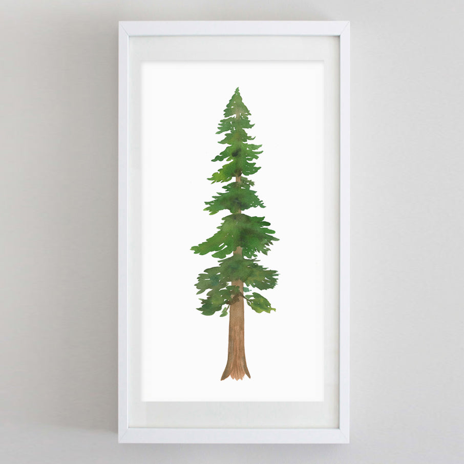 Redwood Tree Watercolor Print