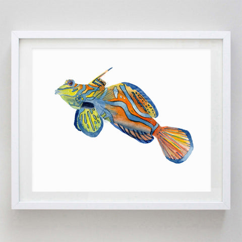 art print - mandarin goby watercolor print - carly rae studio
