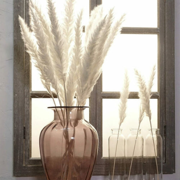 15 Dried Small Pampas Grass
