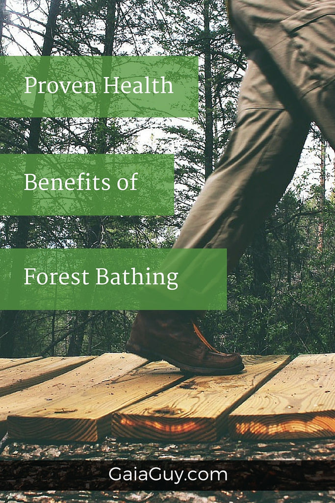 Scientific Proof That Forest Bathing Works