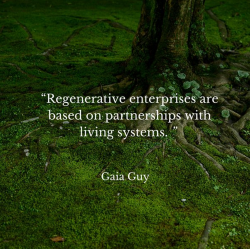 regenerative enterprise permaculture gaia guy