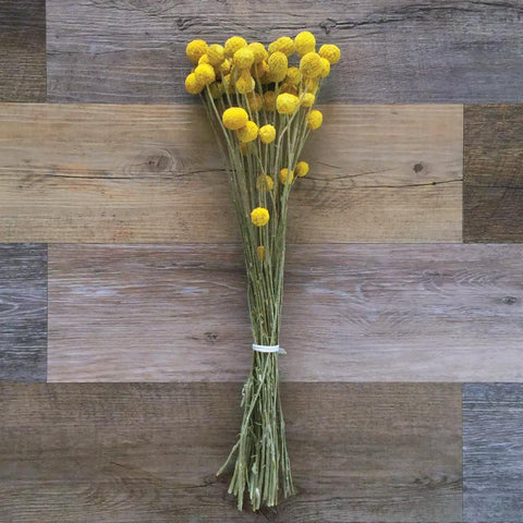 Billy Buttons Bundle