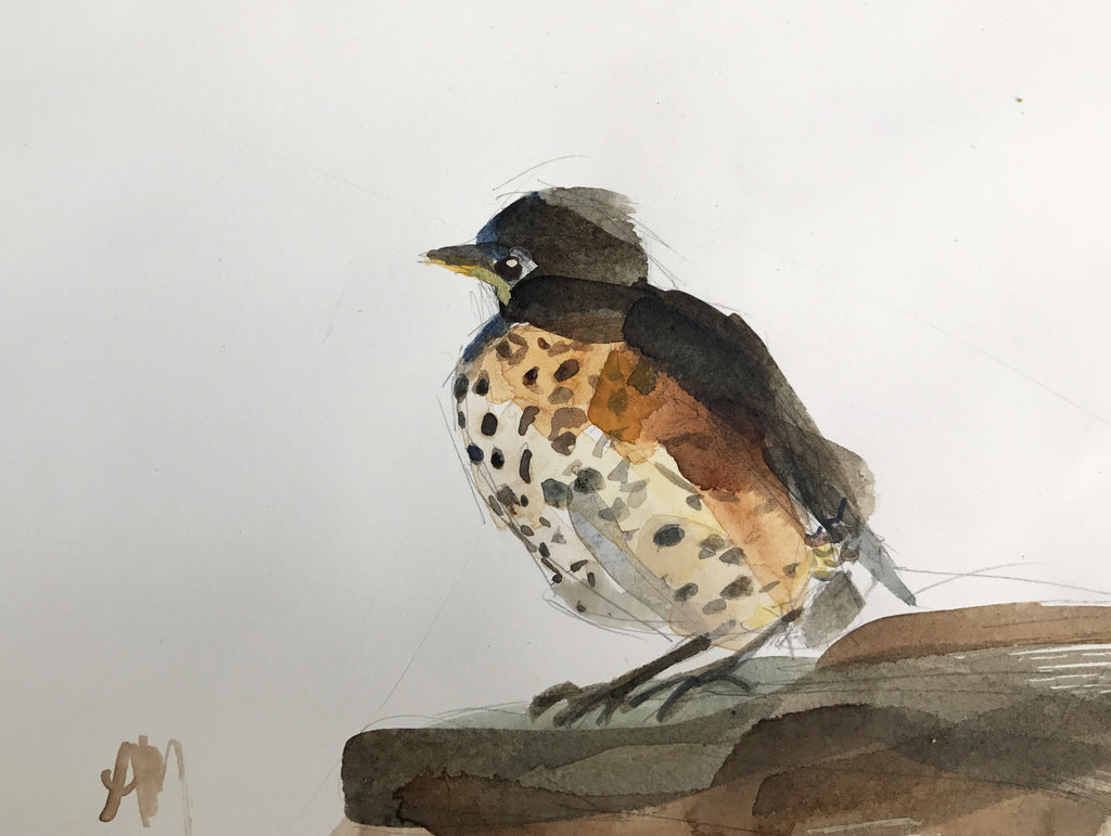 Fledgling Robin Watercolor Painting Demo