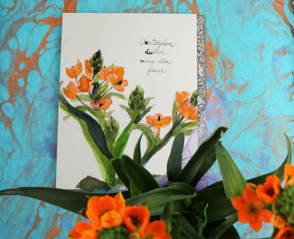 Watercolor Botanical Flowers - Orange Star Flower