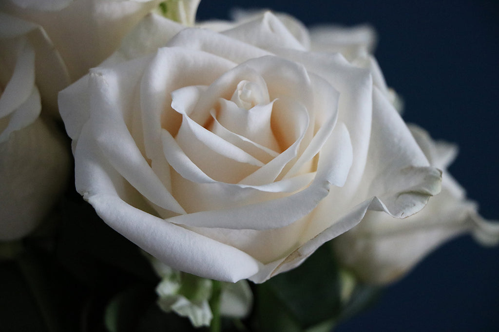 There is Something About White Roses