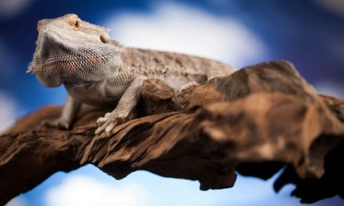 Home Sweet Home: Acclimating Your Pet Reptile to its New Habitat